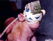 animal-testing-1