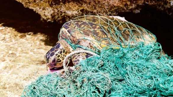 160628184748-plastic-turtle-2-exlarge-169